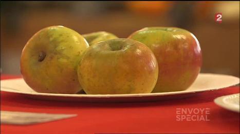 VIDEO. Peut-on encore manger des pommes ? | Chimie verte et agroécologie | Scoop.it