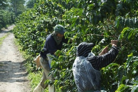 Colombian Coffee Commission Publishes Final Recommendations for Industry Reforms | Coffee News | Scoop.it