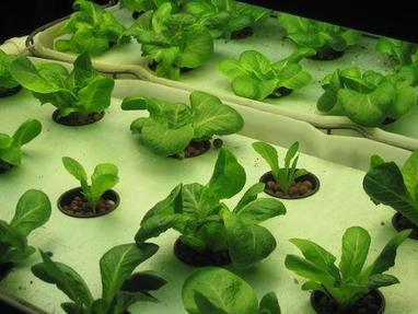 CHELSEA: Local family to share the secrets of aquaponic gardening during March 24 tours - Chelsea Standard - Heritage Newspapers | Vertical Farm - Food Factory | Scoop.it