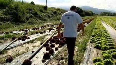 Intempéries : la procédure de reconnaissance de calamité agricole lancée ! | Agriculture | Scoop.it