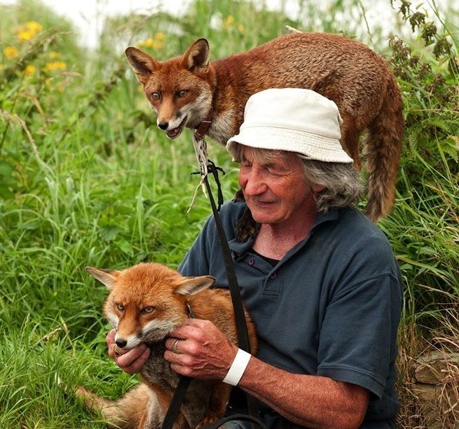 Un irlandais sauve trois renards et bouscule les clichés sur ces animaux