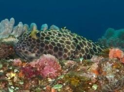 The Top Dive Sites in Ponta do'Ouro, Mozambique (Part 2) | Indigo Scuba | Indigo Scuba | Scoop.it