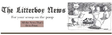 Litterbox thought #1 | The Litterbox News | Scoop.it