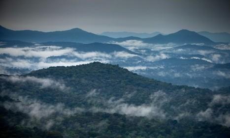 L'avenir du café passe par la protection des forêts éthiopiennes | Enseigner l'Histoire-Géographie | Scoop.it