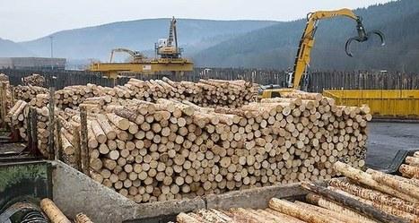 A la veille de la COP 21, l'Etat se mobilise pour la filière bois-forêt | anoribois | Scoop.it