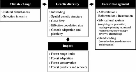 Forests and global change: what can genetics contribute to the major forest management and policy challenges of the twenty-first century? - Springer   The science toolbox   Scoop.it