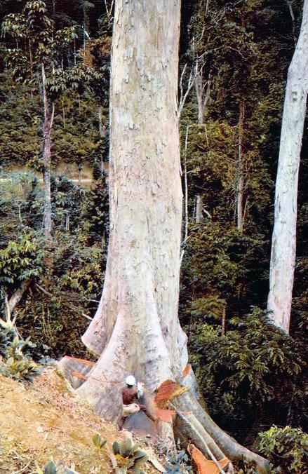 Forêts du bassin du Congo : le FSC promeut la gestion des hautes valeurs de conservation | adiac-congo.com : toute l'actualité du Bassin du Congo | Confidences Canopéennes | Scoop.it