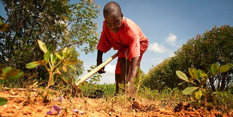 Is muscle or machine the future of agriculture in Africa? | Maritz Africa | Cultibotics | Scoop.it
