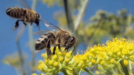 Bees and butterflies get a boost from the feds | Sustain Our Earth | Scoop.it