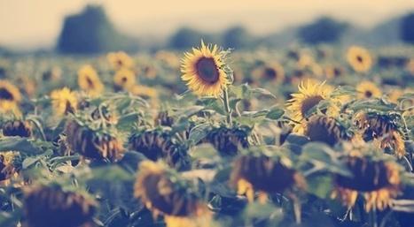 Van Gogh, premier artiste Instagram - Slate.fr | clelia | Scoop.it