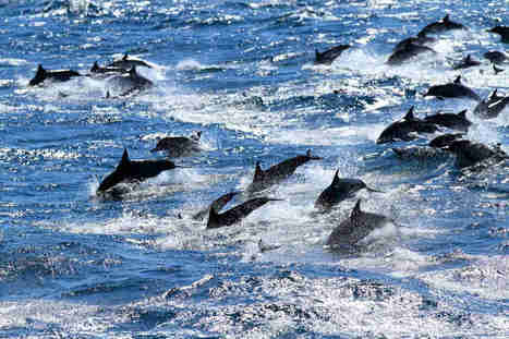 This is How We Should #Experience #Dolphins & #Whales (VIDEO) ~ #Free | Rescue our Ocean's & it's species from Man's Pollution! | Scoop.it
