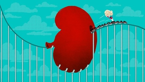 How a Roller Coaster Can Help You Pass a Kidney Stone | News we like | Scoop.it