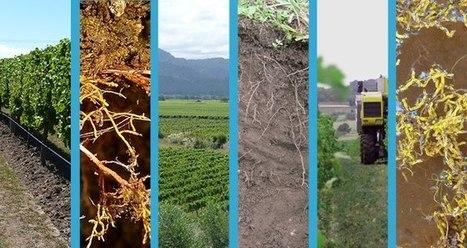Rencontres Qualiméditerranée 2016 - Qualité des sols et terroirs viticoles 15-16/11/2016, Montpellier, France | AGRONOMIE VEGETAL | Scoop.it