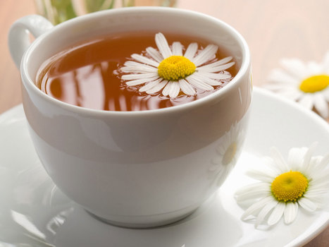 Why Chamomile Tea is Good for You | ForHealthBenefits | Scoop.it
