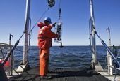 Whale Spotter app to help curb strikes by ships | Sustain Our Earth | Scoop.it