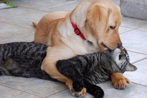 Cómo calcular la edad de tu gato y tu perro - Diario UNO de Entre Ríos | Los gatos | Scoop.it