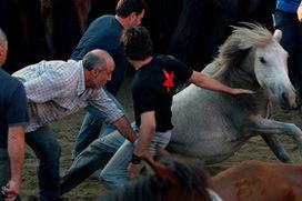 Rapa Das Bestas: Man-horse wrestling   Crazy Spain Festivals   Spanish Entertainment   Scoop.it