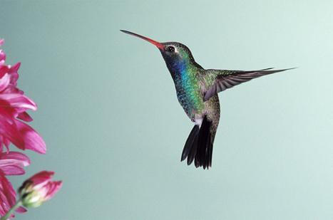 Il SEO è morto? Ecco come funziona Hummingbird | Marketing & Publicity | Scoop.it