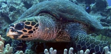 Endangered Species List Update - Guardian Liberty Voice | Antarctica | Scoop.it