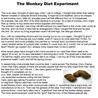 diet monkey
