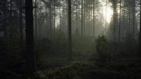 Nos forêts victimes du réchauffement climatique   Ca m'interpelle...   Scoop.it
