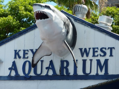Things to do with kids at Key West | Econo Car Rental | Car Rentals At Tampa | Scoop.it