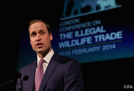 Prince William will need new ideas to tackle wildlife crisis | Wildlife Trafficking: Who Does it? Allows it? | Scoop.it