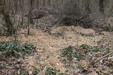 Découvrez le BRF, ce compost amélioré qui fait revivre les sols | pour mon jardin | Scoop.it