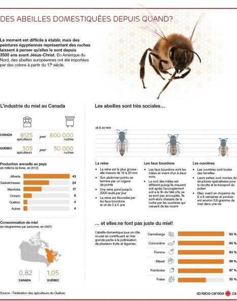 Le péril des abeilles   Insect Archive   Scoop.it