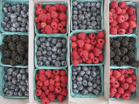 The Best Berries For Your Health | Healthy Lifestyle | Scoop.it