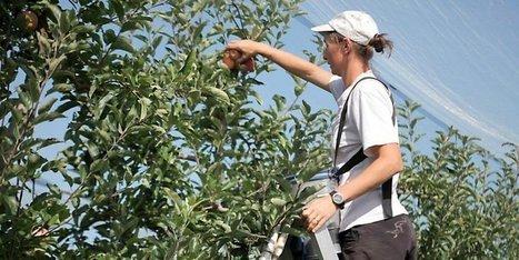 Dordogne : des portes ouvertes chez les pomiculteurs | Agriculture en Dordogne | Scoop.it