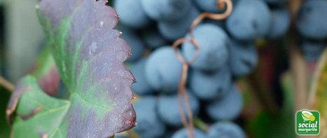 Digital Marketing e Social Media per la promozione del vino | Social Margarita | Pillole di Marketing per chi vuole fare una buona impresa | Scoop.it