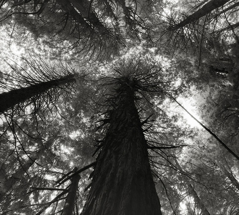 Photographer captures the magnetism of 'Ancient Trees' | Wildlife and Environmental Conservation | Scoop.it