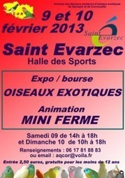 Exposition et bourses d'oiseaux exotiques à Saint Evarzec | Quimper | Scoop.it