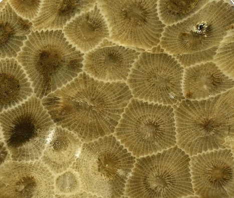 Petoskey Stones of Michigan | Ambientales | Scoop.it
