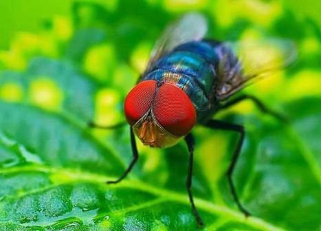 Physicists eye neural fly data, find formula for Zipf's law | Intelligence | Scoop.it