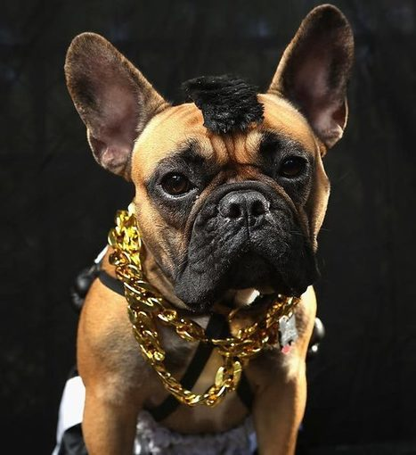 Halloween Dog Parade - SI.com Photos | Sports that are happening now | Scoop.it