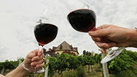 Le monde risque une pénurie de vin | Le vin quotidien | Scoop.it