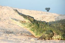New Genome Research Illuminates Bird, Crocodile Evolution | Yuma News Now | CALS in the News | Scoop.it