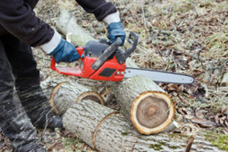 Different Means to Conduct a Safe Tree Removal | Affordable tree removing by Roswell Tree Service LLC | Scoop.it