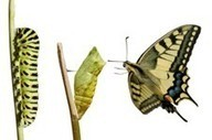 Change Management: Making Organization Change Happen Effectively | Change Management | Scoop.it