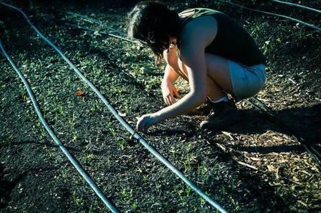 Pomona College Organic Farm   Pomona College   Energy supply - biofuels - soil science   Scoop.it