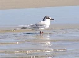 Create Wildlife Reserves for Endangered Bird | GarryRogers Biosphere News | Scoop.it