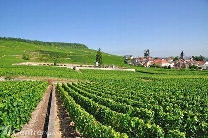 Petit tour des régions au moment des vendanges | Le Vin et + encore | Scoop.it