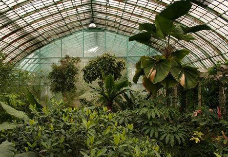 Les jardins botaniques de Paris | Un Jour de plus à Paris | Biomimétisme - Biomimicry | Scoop.it
