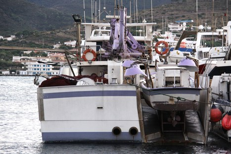 Où sont passés les anchois et les sardines ? | HALIEUTIQUE ECOLOGIE MARINE | Scoop.it