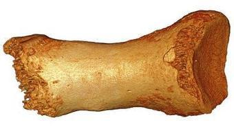 DNA from Neanderthal toe reveals interbreeding among ancient species | Ancient Origins of Science | Scoop.it