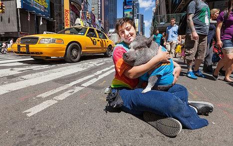 10 Weird Service Animals - ODDEE | enjoy yourself | Scoop.it