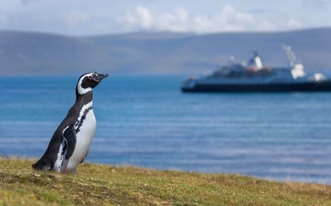 Cruise ship row 'strangling' Falkland Islands - Telegraph   CruisePictures   Scoop.it