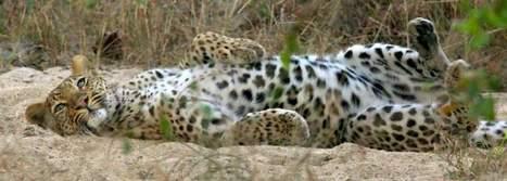 Ultimate Wildlife Tours South Africa | Wildlife cruises | Scoop.it